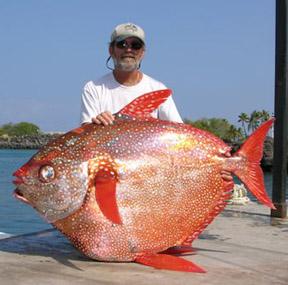 Hawaii state records detail for Hawaiian moon fish
